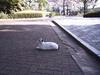 050604_cats_b2
