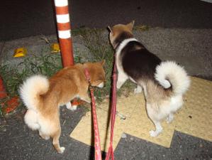20111018_mimiwaka